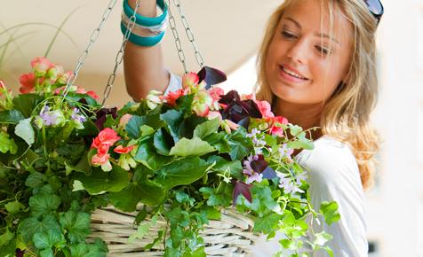 Blumenkübel holen Sommerblumen auf den Balkon
