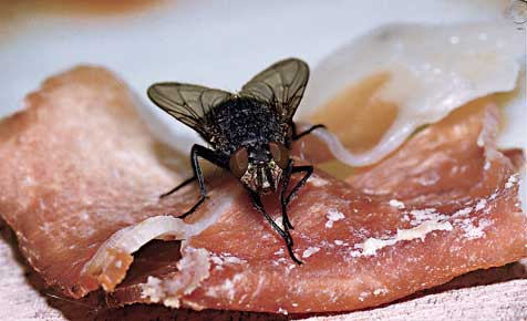 Wirkungsvolle Schädlingsbekämpfung
