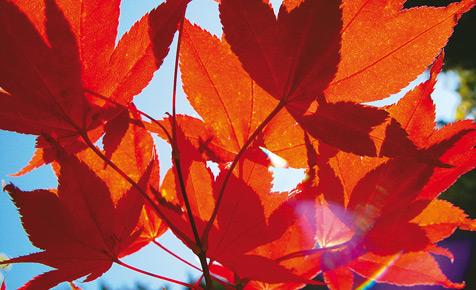 Herbst: Laub rechen und kompostieren