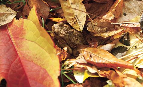 Laubhaufen: Kein Platz für Igel