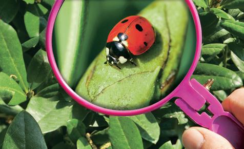 Mittel gegen Schädlinge