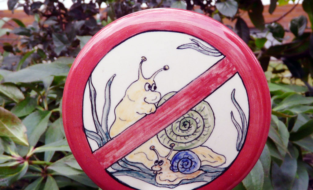 Schnecken: Nacktschnecken bekämpfen