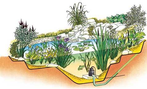 Teichbepflanzung