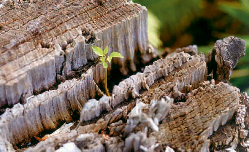 Grundwissen Holz