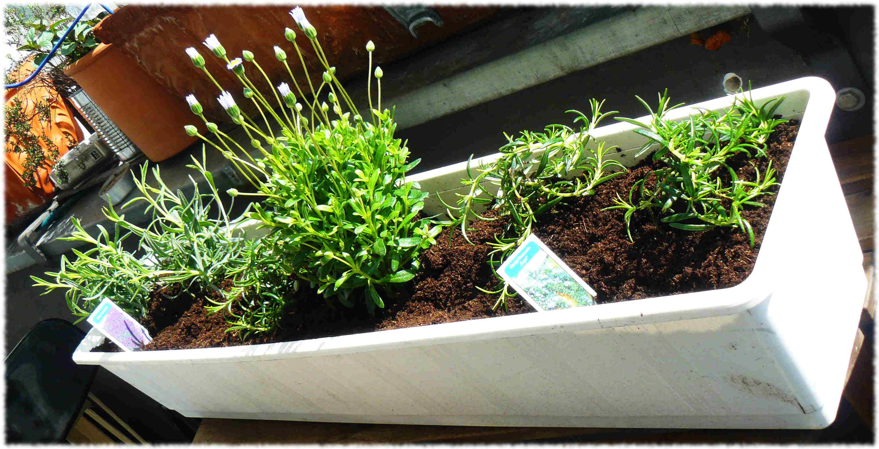 Tipps bei der Bepflanzung von Blumenkästen