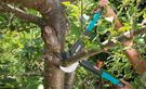 Baumschnitt: Baum schneiden