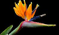 Pflegeleichte Blütenpracht: Diese Topfpflanzen bieten Karibikflair