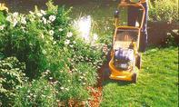 Rasenmähen an Rasenkante