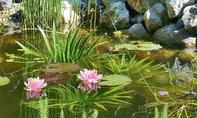 Teich bepflanzen