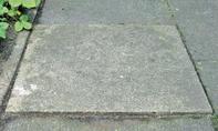 Steinpflaster: Ameisenschäden beheben