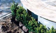Hecke pflanzen