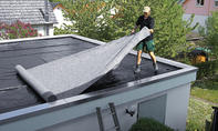 Dachbegrünung pflanzen