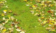Laub mit Rasenmäher entfernen