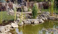 Teichrand: Uferzone