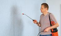 Wand tapezieren, Wand streichen
