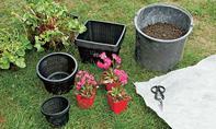 Teichpflanzen einsetzen