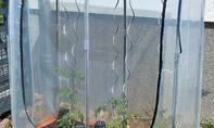 Tomatenhaus