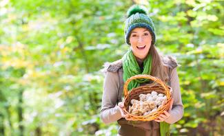 Speisepilze im Wald sammeln