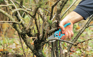 Häufig Baumschnitt | selbst.de NO21