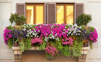 Balkonpflanzen Sichtschutz