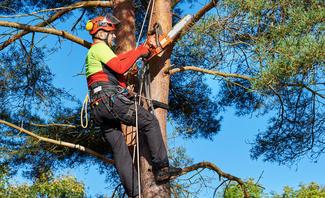 Mann fällt Baum