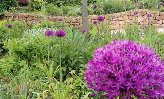 Artenvielfalt im Garten