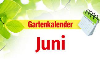 Gartenkalender Juni