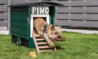 Hundehütte bauen