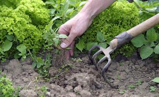 Unkraut im Garten