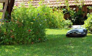Insektenfreundlicher Rasen