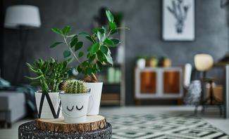 Zimmerpflanzen für dunkle Räume