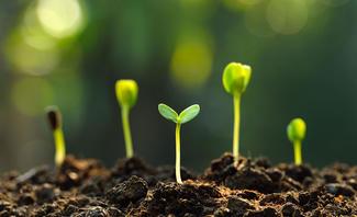 Wachsende Pflanzen in der Erde