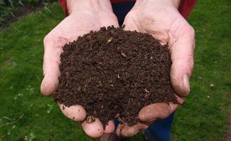 Komposterde wird in zwei geöffneten Händen gehalten