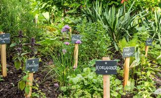 Kräutergarten mit Basilikum, Koriander und mehr