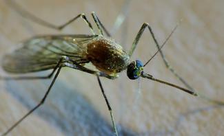 Mückenfalle