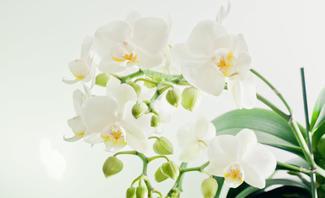Orchideen kaufen
