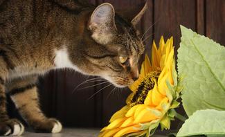 Pflanzen für Katzen