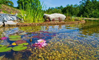 pH-Wert im Teich