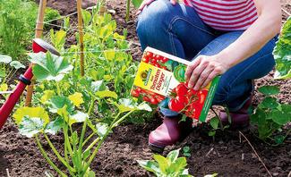 Tomatendünger wird auf Tomatenpflanze gegeben