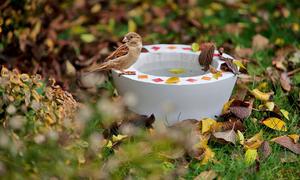 Vogelbad selber bauen