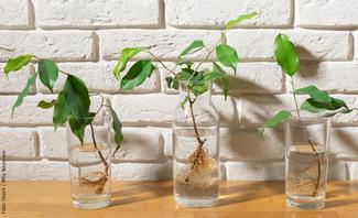 Waterplants