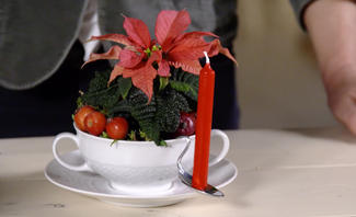 Weihnachtsstern Pflege