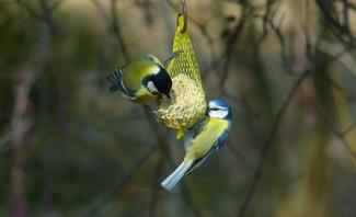Winterfütterung Vögel