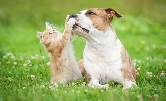 Zecken bei Hund Katze