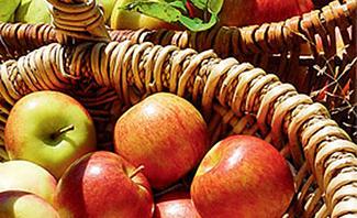 Dieses einfache Utensil erleichtert Ihnen die Apfelernte!