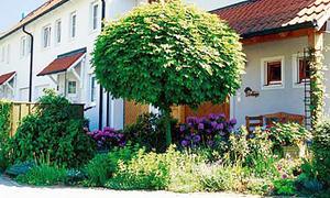 Baum umpflanzen