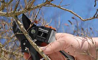 Baumschnitt: Sträucher schneiden