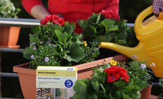 Balkonpflanzen für den Blumenkasten