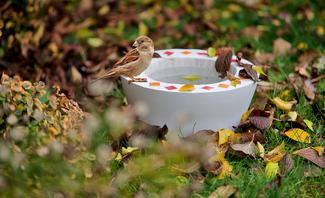 Beton gießen: Vogeltränke