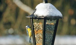 Vogelfuttersilo selber bauen - Futterhaus selber ...